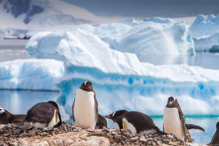 Antarctica with Kids: Gentoos and icebergs