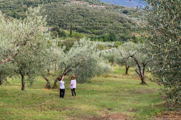 Villa in Tuscany: Playing among the olive trees