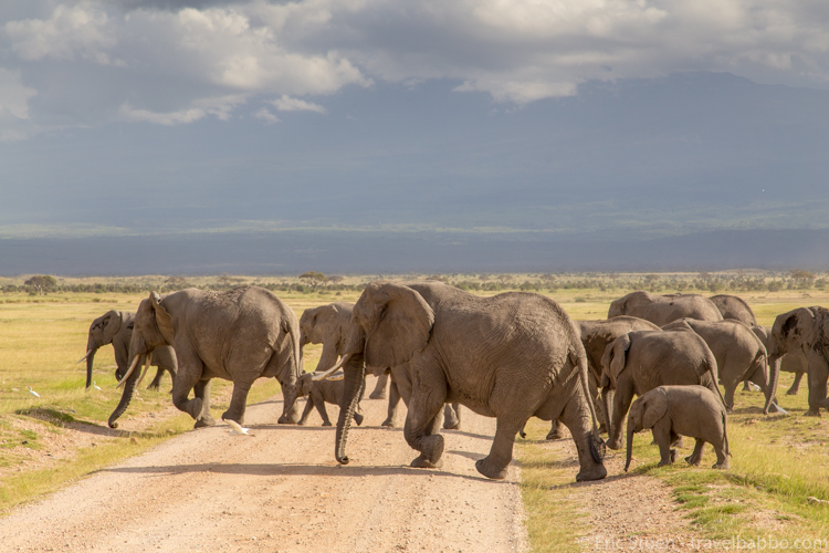 How to Afford an African Safari - Elephant crossing in Kenya's Amboseli National Park