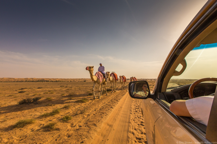 Dubai layover - Passing a camel caravan during our evening desert safari