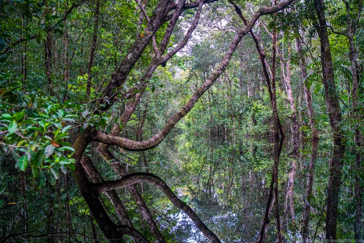 Amazon Rain Forest with Kids - Welcome to the Upside Down