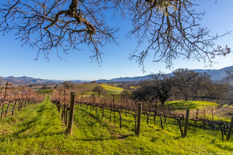 Sunday Blues - Hiking at Quintessa Vineyards in St. Helena