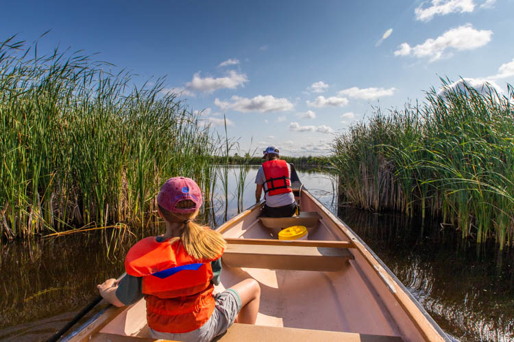 Winnipeg Manitoba - Looking for birds from our canoe at Oak Hammock Marsh