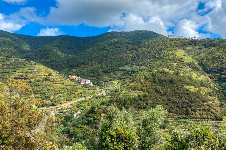 The real Cinque Terre - vineyards everywhere